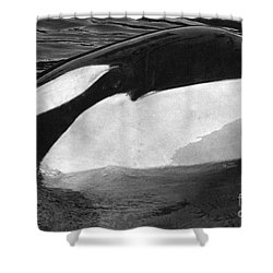 Kandu Orca Seattle Aquarium 1969 Pat Hathaway Photo Killer Whale Seattle Shower Curtain by California Views Mr Pat Hathaway Archives