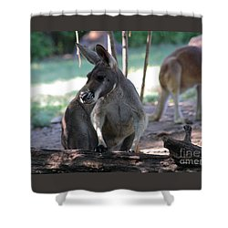 Kangaroo-2 Shower Curtain by Gary Gingrich Galleries