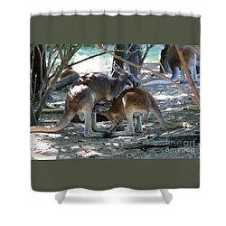 Kangaroo Nurse-6 Shower Curtain by Gary Gingrich Galleries