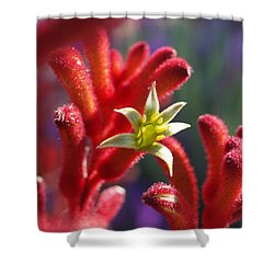 Kangaroo Star Shower Curtain