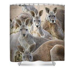 Kangaroos Waga Waga Australia Shower Curtain by Jim Julien