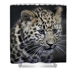 Shower Curtain featuring the photograph Kanika - Amur Leopard Portrait by Chris Boulton