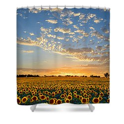 Kansas Sunflowers At Sunset Shower Curtain