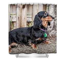 Katie Shower Curtain by Jim Thompson