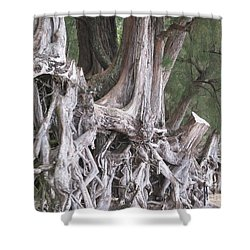 Kauai - Roots Shower Curtain by HEVi FineArt