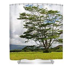 Kauai Umbrella Tree Shower Curtain