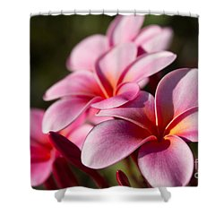 Kaupo Summer Treasure Shower Curtain by Sharon Mau