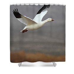 keep flying Goose Shower Curtain by Ruth Jolly