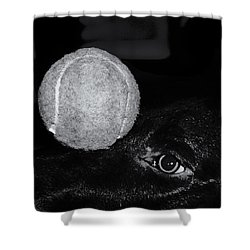 Keep Your Eye On The Ball Shower Curtain by Roger Wedegis