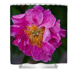 Keeper Of The Light Shower Curtain by Omaste Witkowski
