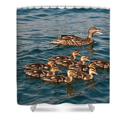 Shower Curtain featuring the photograph Keeping Them All Inline by Brenda Jacobs