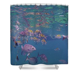 Keys Reef Shower Curtain by Carey Chen