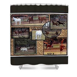 Horses Kickin It  Shower Curtain