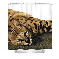 Kili Man Jaro Shower Curtain