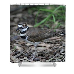 Killdeer Shower Curtain by Dan Sproul