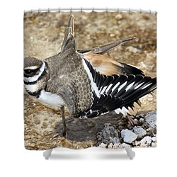Killdeer Fakeout Shower Curtain