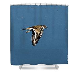 Killdeer In Flight Shower Curtain