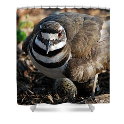 Killdeer Mom Shower Curtain by Skip Willits