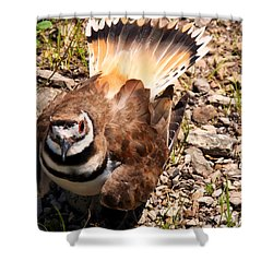 Killdeer On Its Nest Shower Curtain by Chris Flees