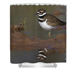 Shower Curtain featuring the photograph Killdeer Reflection by Bryan Keil