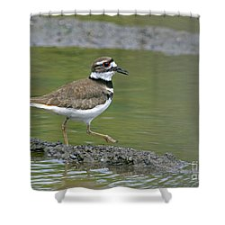 Killdeer Walking Shower Curtain by Sharon Talson