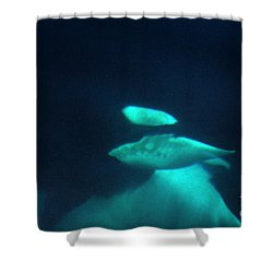 Shower Curtain featuring the photograph Killer Whales Orcas Under Water  Off The San Juan Islands 1986 by California Views Mr Pat Hathaway Archives