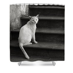 Shower Curtain featuring the photograph Kimba by Laura Melis
