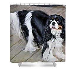 King Charles On The Boardwalk Shower Curtain by Kristina Deane
