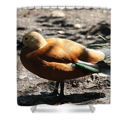King Eider Duck Shower Curtain by John Telfer