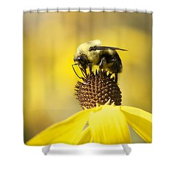 King Of The Coneflower Shower Curtain by Penny Meyers