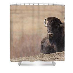 King Of The Hill At Custer State Park South Dakota Shower Curtain