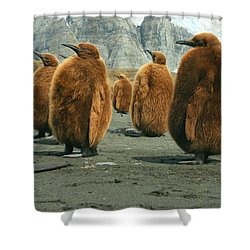 King Penguin Chicks Shower Curtain by Amanda Stadther