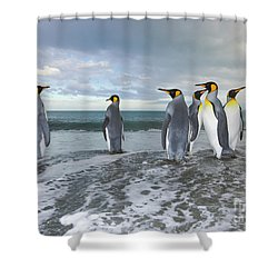 King Penguin In The Surf Shower Curtain by Yva Momatiuk John Eastcott
