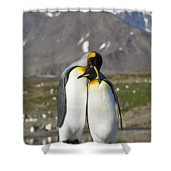 Shower Curtain featuring the photograph King Penguins Courting St Andrews Bay by Konrad Wothe