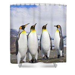 King Penguins St Andrews Bay Shower Curtain by Yva Momatiuk John Eastcott