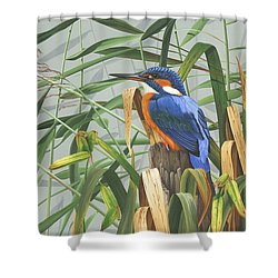 Kingfisher Shower Curtain by Clive Meredith