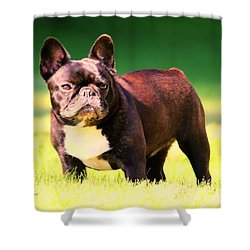 King's Frenchie - French Bulldog Shower Curtain