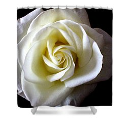 Shower Curtain featuring the photograph Kiss Of A Rose by Shana Rowe Jackson