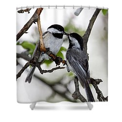 Kissing Chickadees Shower Curtain