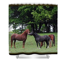Kissing Cousins- The Paso Fino Stallions Shower Curtain by Patricia Keller