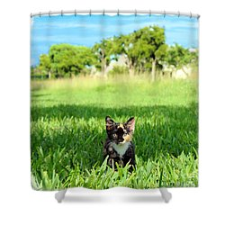 Kitten Shower Curtain by Carsten Reisinger