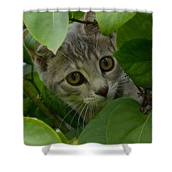 Kitten In The Bushes Shower Curtain