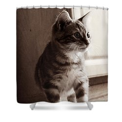 Shower Curtain featuring the photograph Kitten In The Light by Melanie Lankford Photography