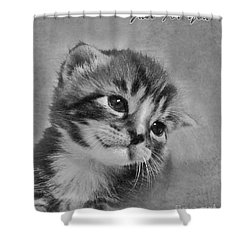 Kitten Just For You Shower Curtain by Terri Waters