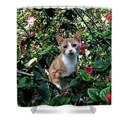 Kitten Shower Curtain by Pamela Walton