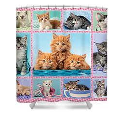 Kittens Gingham Multi-pic Shower Curtain by Greg Cuddiford