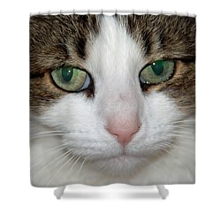 Shower Curtain featuring the photograph Kitty by Aimee L Maher Photography and Art Visit ALMGallerydotcom