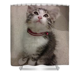 Kitty - Forgotten Innocence Shower Curtain by Barbara Yearty