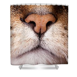 Kitty Nose  Shower Curtain by Sharon Dominick