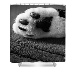 Kitty Paw Close Up Shower Curtain by Sharon Dominick